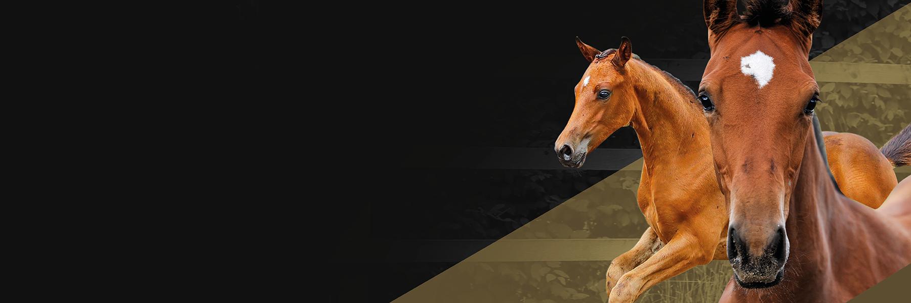 Online Foal Auction 2021