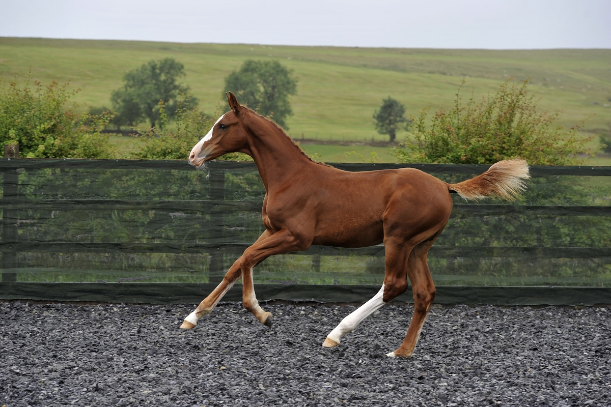 Foal & Embryo Auction Online