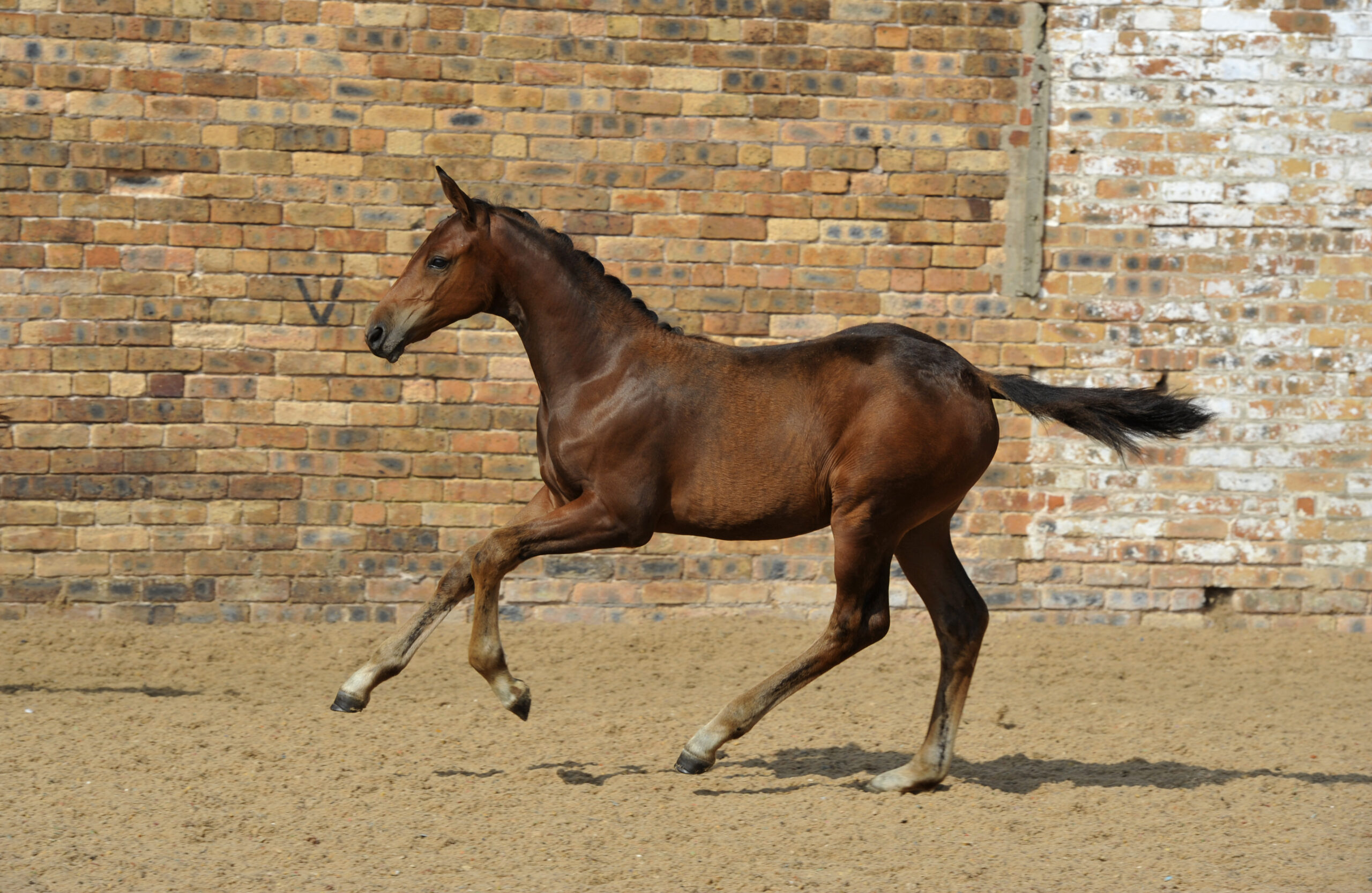 New collection launches for the Science Supplements Bolesworth Elite Foal & Embryo Online Auction